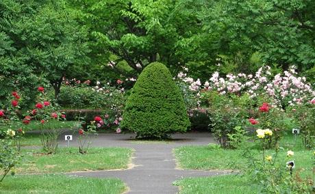 花木園10.jpg